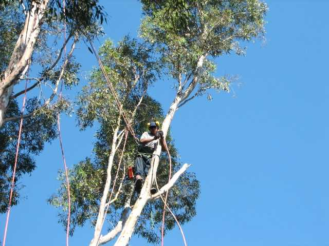Tree Services – Helping You With Your Trees